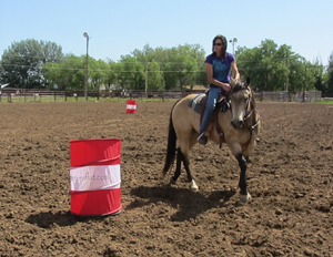 Consistant contact helps a horse stay round in their body.