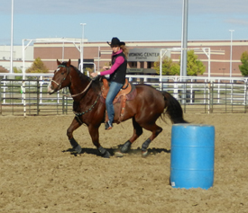 How round and gathered is your horse as he circles a barrel?