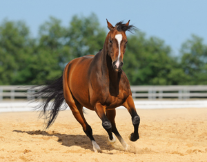 Be realistic about your desires and your horse's ability.