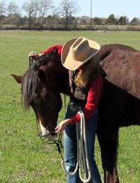Encourage your horse to seek the halter.