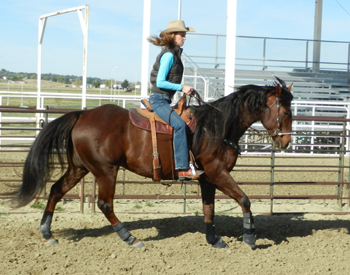 Dropping the shoulders at a lope as the hind legs trail out behind.