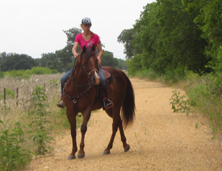 When your horse is distressed, notice & take action!