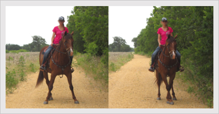Building Confidence and Focus in the Barrel Horse