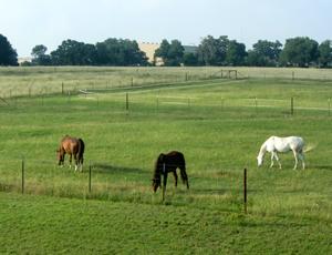 Grazing on pasture