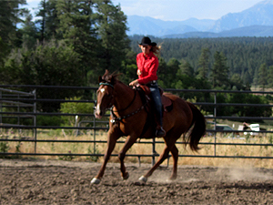 Is your horse responsible for quality movement?