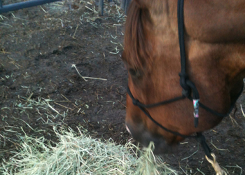Forage is the foundation of horse health - be selective.