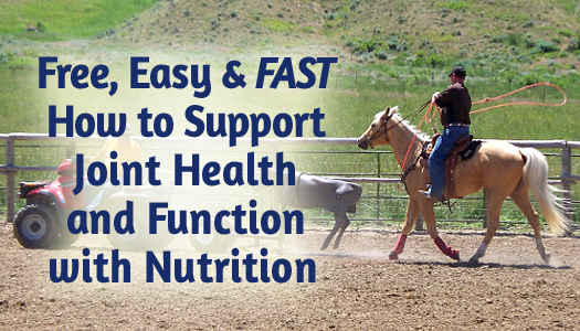 Free, Easy and FAST – How to Support Joint Health and Function with Nutrition