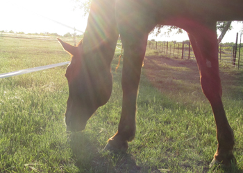 Grazing - good for the equine body, mind and soul.