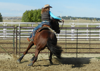A barrel horse's joints take a beating - feed (and ride) accordingly!