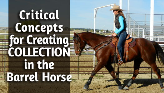 Critical Concepts for Creating COLLECTION in the Barrel Horse