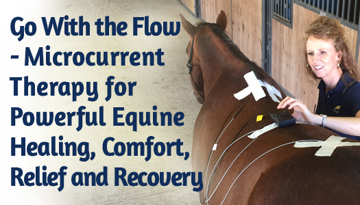 Go With the Flow - Microcurrent Therapy for Powerful Equine Healing, Comfort, Relief and Recovery