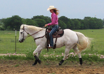 When the withers elevate, the hind legs can reach further forward.