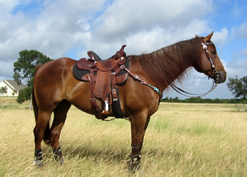 Your horse's build plays a factor in how easily and safely he can navigate the pattern.