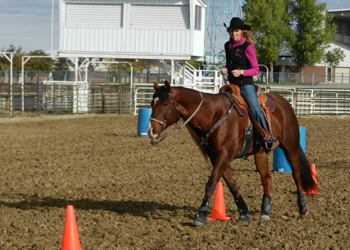 Can your horse follow patterns guided by focus alone?