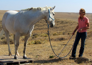 Pedestal work is just one of MANY ways to teach calm confidence on challenging footing.