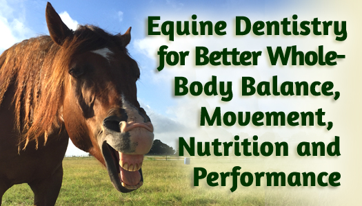 Equine Dentistry for Better Whole-Body Balance, Movement, Nutrition and Performance