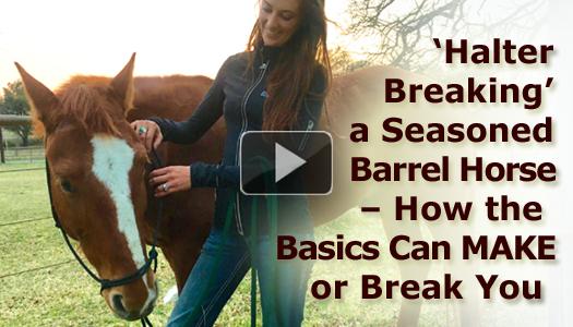 'Halter Breaking' a Seasoned Barrel Horse - How the Basics Can MAKE or Break You