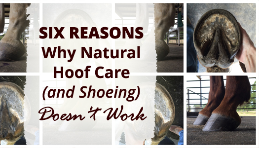 Six Reasons Why Natural Hoof Care (AND Shoeing) Doesn't Work