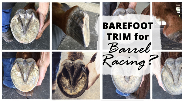 Barefoot Trim for Barrel Racing?