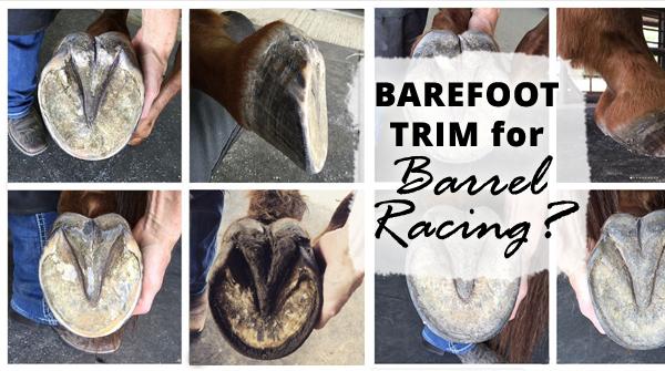 Barefoot Trim for Barrel Racing?