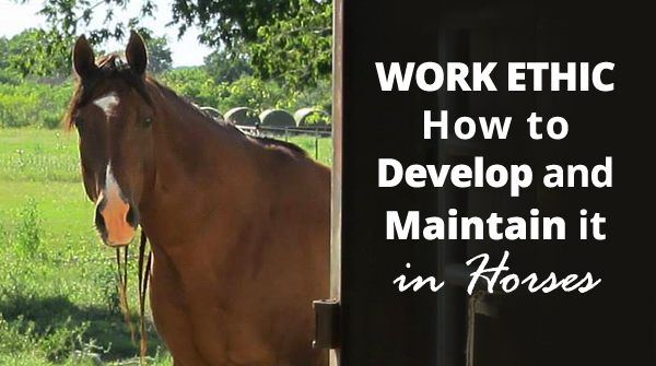 Work Ethic – How to Develop & Maintain It in Horses